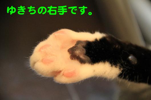 IMG_0077_Rゆきち右手
