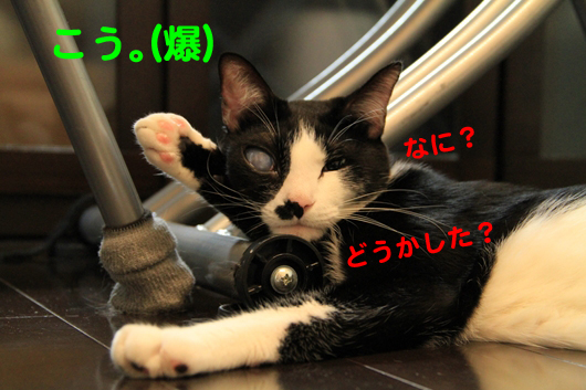 IMG_0051_Rこう(爆)