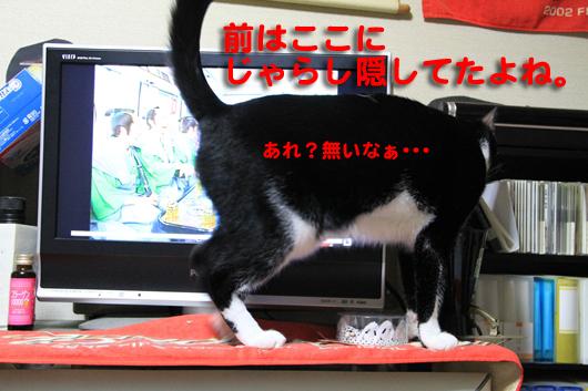 IMG_0103_Rじゃらし無い?