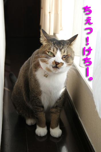 IMG_0013_Rちぇっ、けちー。