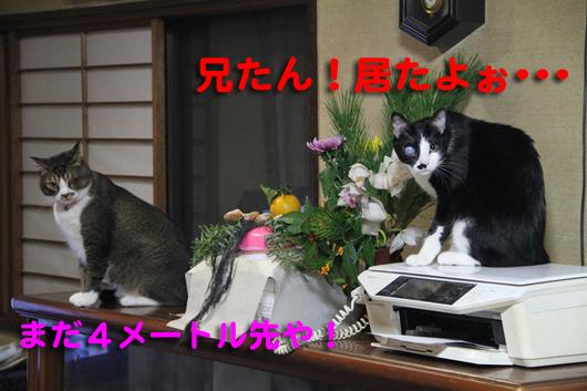 IMG_0305_R居たよぉ