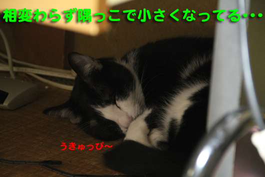 IMG_0317_Rうきゅっぴ~