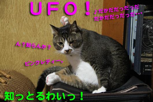 IMG_0297_RUFO!
