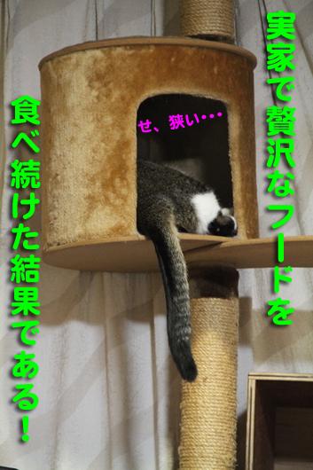 IMG_0094_R贅沢フード