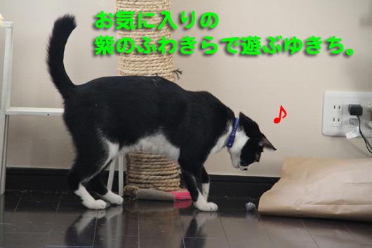 IMG_0006_R紫ふわきら