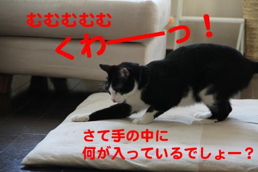 IMG_0041_Rくわーっ!