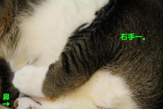 IMG_0254_R右手と鼻