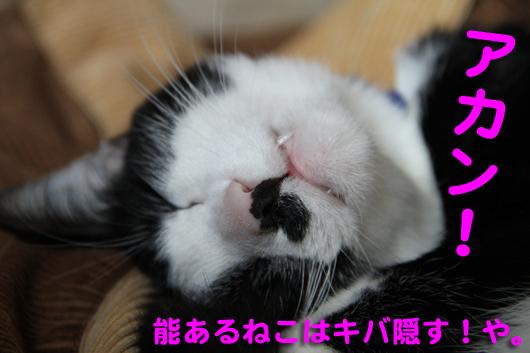 IMG_0593_Rアカン!