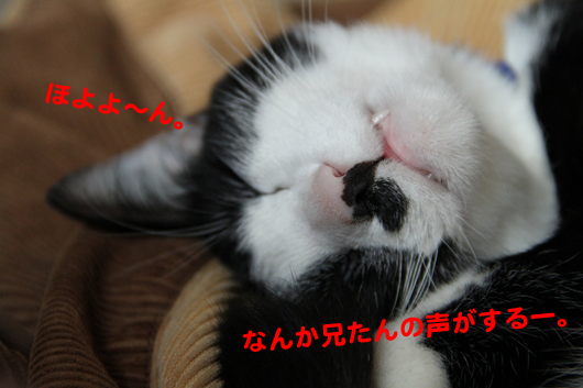 IMG_0594_Rほよよ~ん