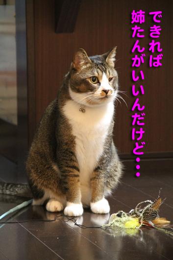 IMG_0467_R姉たんがいい