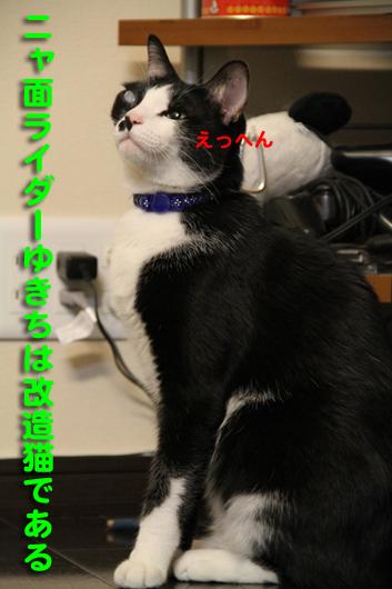 IMG_0228_R改造猫