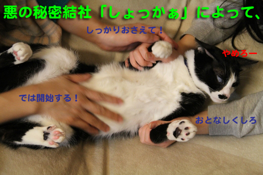 IMG_0217_Rしょっかぁ