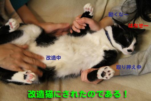 IMG_0219_R改造猫