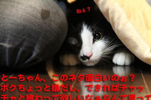 IMG_0273_Rネタ面白い?
