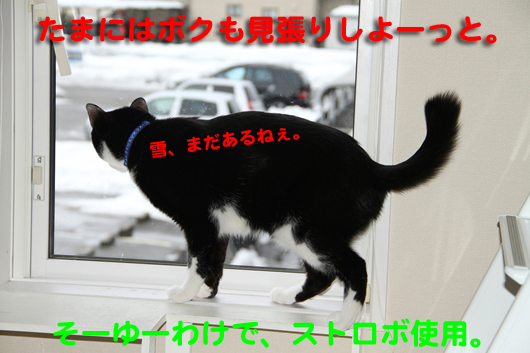 IMG_2453_Rストロボ使用