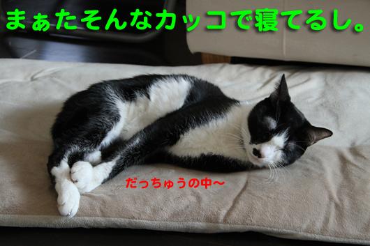 IMG_0117_Rだっちゅうの寝