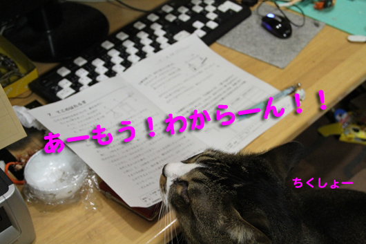 IMG_0050_Rわからーん!!