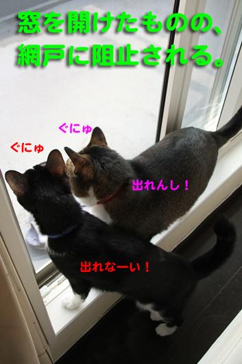 IMG_0081_R網戸に阻止