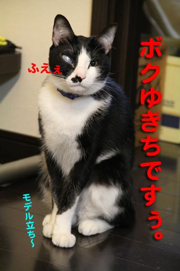 IMG_0301_Rふえ、ゆきちですぅ