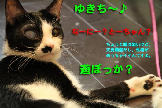 IMG_0816_R遊ぼっか?