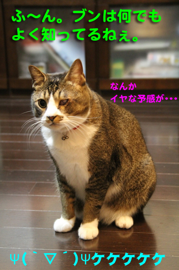 IMG_0286_RΨ(`▽´)Ψケケケ