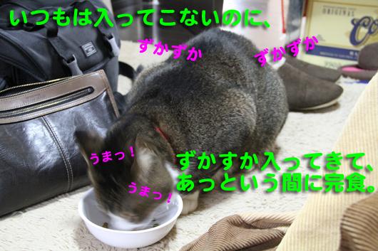 IMG_0188_Rうまっ!うまっ!