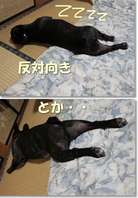 初夏寝相-2
