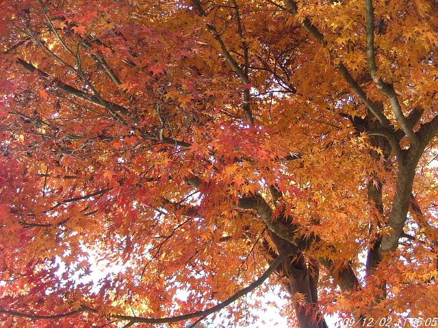 111桜山公園にて1202画像0008