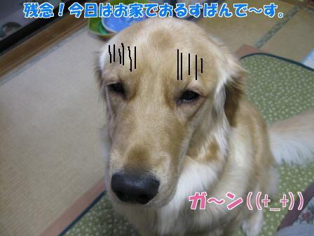 IMG_2118.jpg