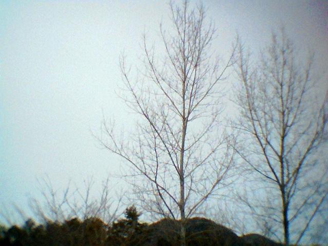 Photo201102009.jpg