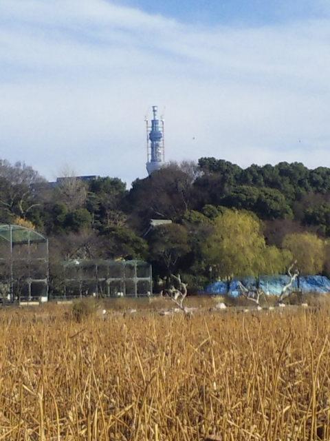上野から見るスカイツリー