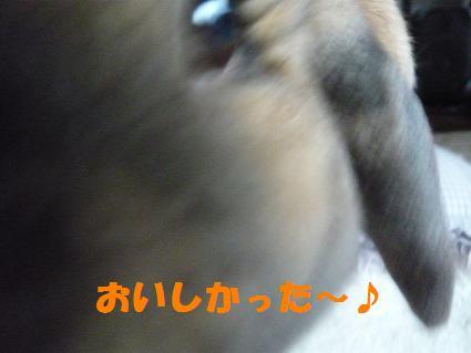 P1100172.jpg