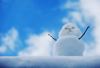 snow のコピー.bmp