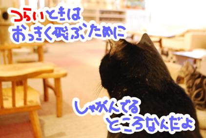 25 - コピー - コピー
