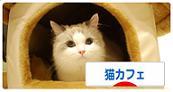 DSC_0263_20091120121817.jpg