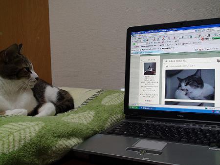 自分のブログを見るノンタ?