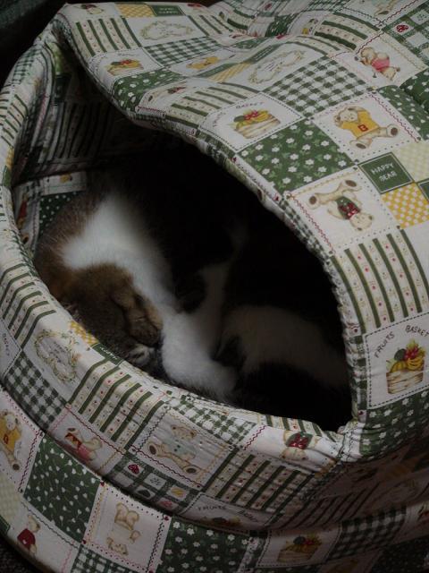 眠るノンタ