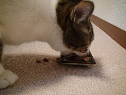 食事中のノンタ