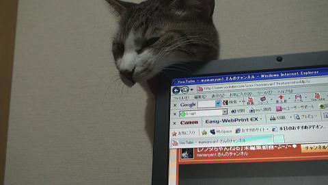パソコンを噛む猫5