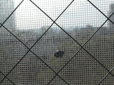 窓の向こうのてんとう虫