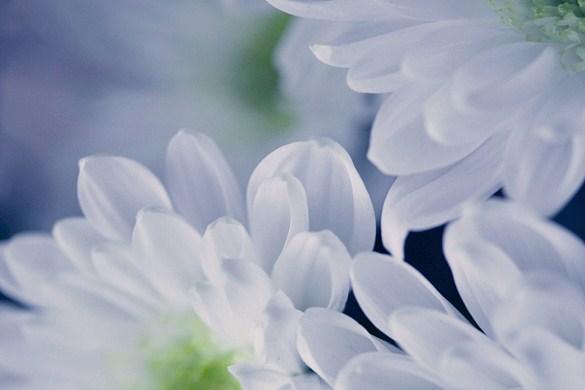 Jan16-flower.jpg