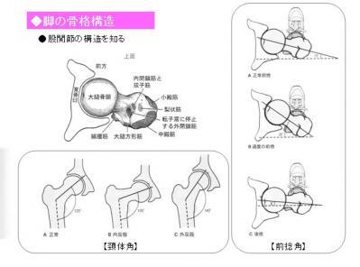 股関節の骨格構造