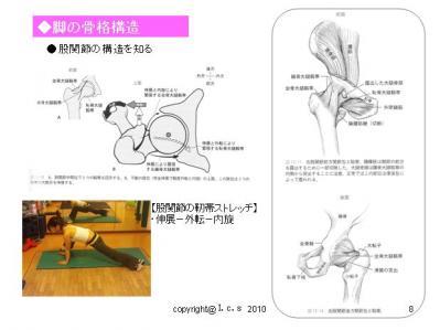 股関節の骨格構造2
