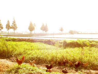 chicken_koujun.jpg