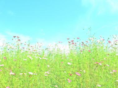 kiyosato_yamanashi.jpg