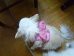 ピンクのてんしちゃん