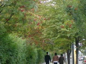新川通りの風景