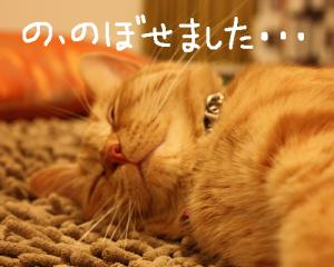 IMG_5367.jpg
