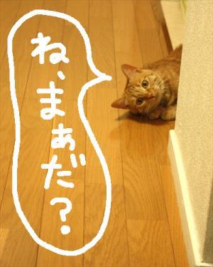 IMG_5698.jpg