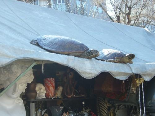 20100114上野骨董市4